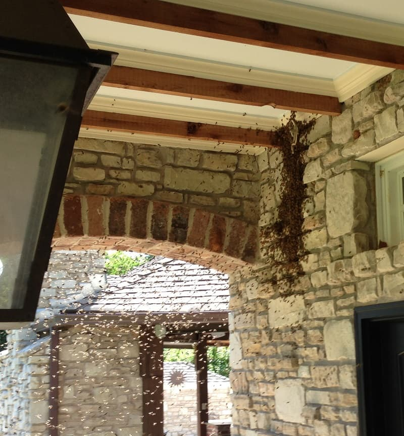 honey bee infestation on outside of stonewalled house under patio cover