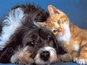 black and white dog laying on the floor with orange and white cat laying next to the dog on blue background