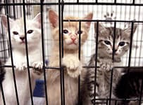 three kittens in three different colors, white, orange, black/grey leaning on the side of a kennel.