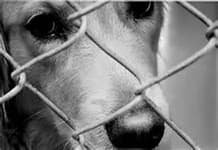 black and white photo of a close up of dog's face looking through a fence